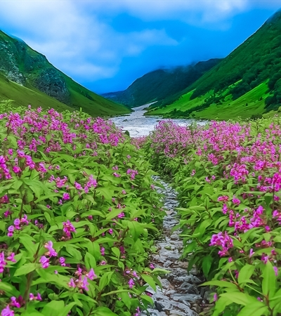 Valley of Flowers_1