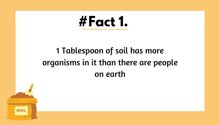 world soil day_1&nb
