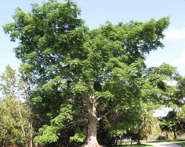 tree_1H x W: