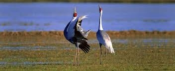 Keoladeo National Park -_