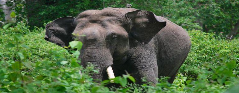 45 elephants & 204 people lost lives in Years of Conflict